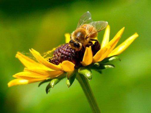 Honeybee, West Valley City, UT