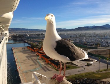 The Curious Seagull, Ensenada, Mexico